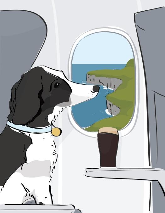 Dog on wrong flight